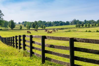 Milton Equestrian District Horses
