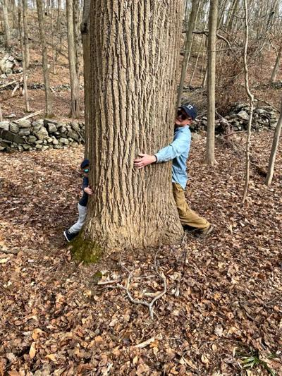 McKay big trees
