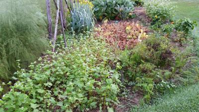 mckay garden