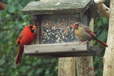 Roland Garneau birds