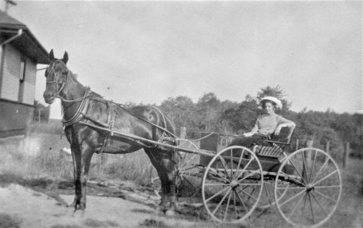 Ella Page in her horse and buggy at Danville R.R. station -.jpg