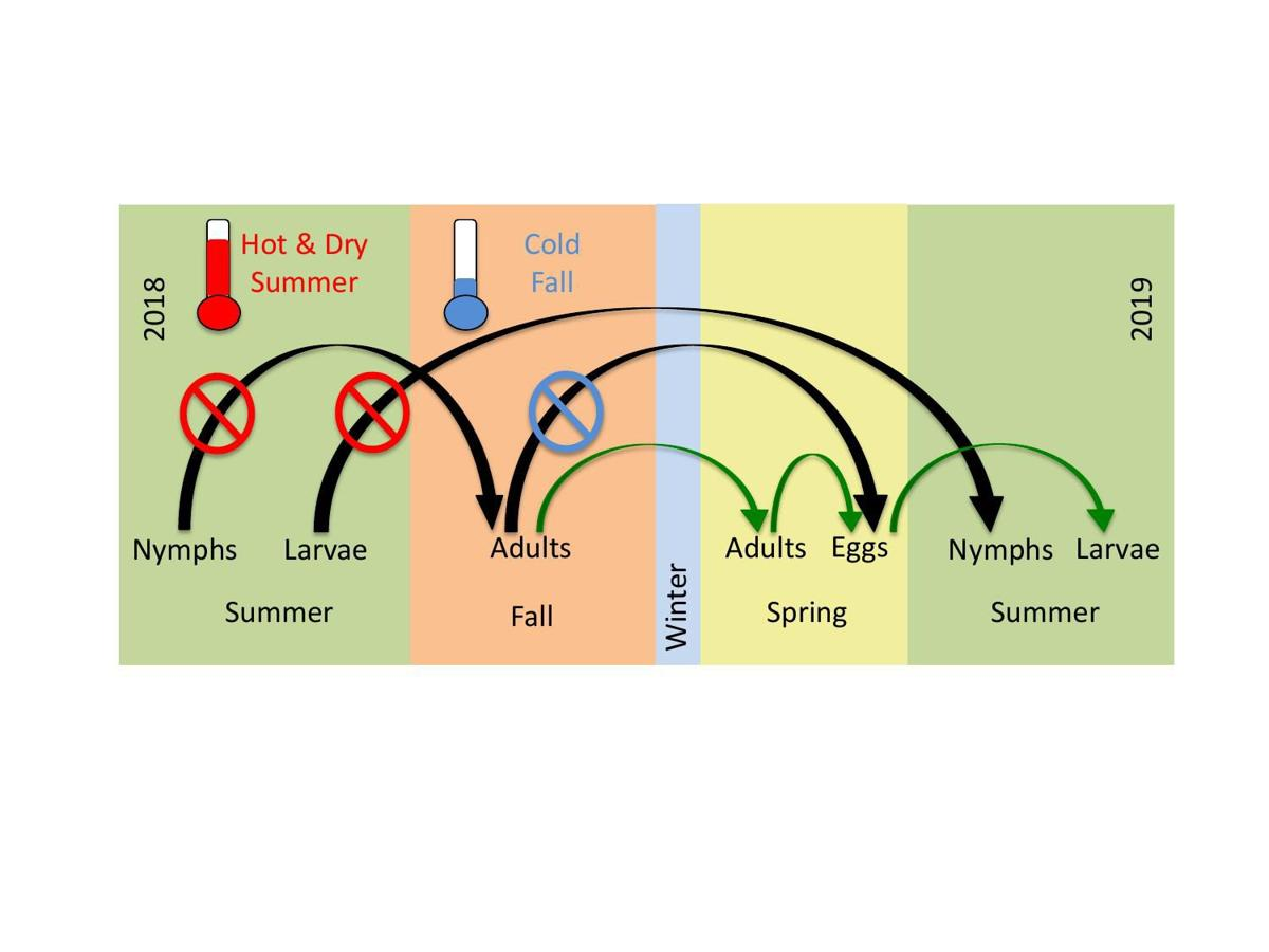 Life Cycle Graphic.pdf