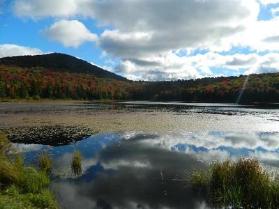 felicia white pond