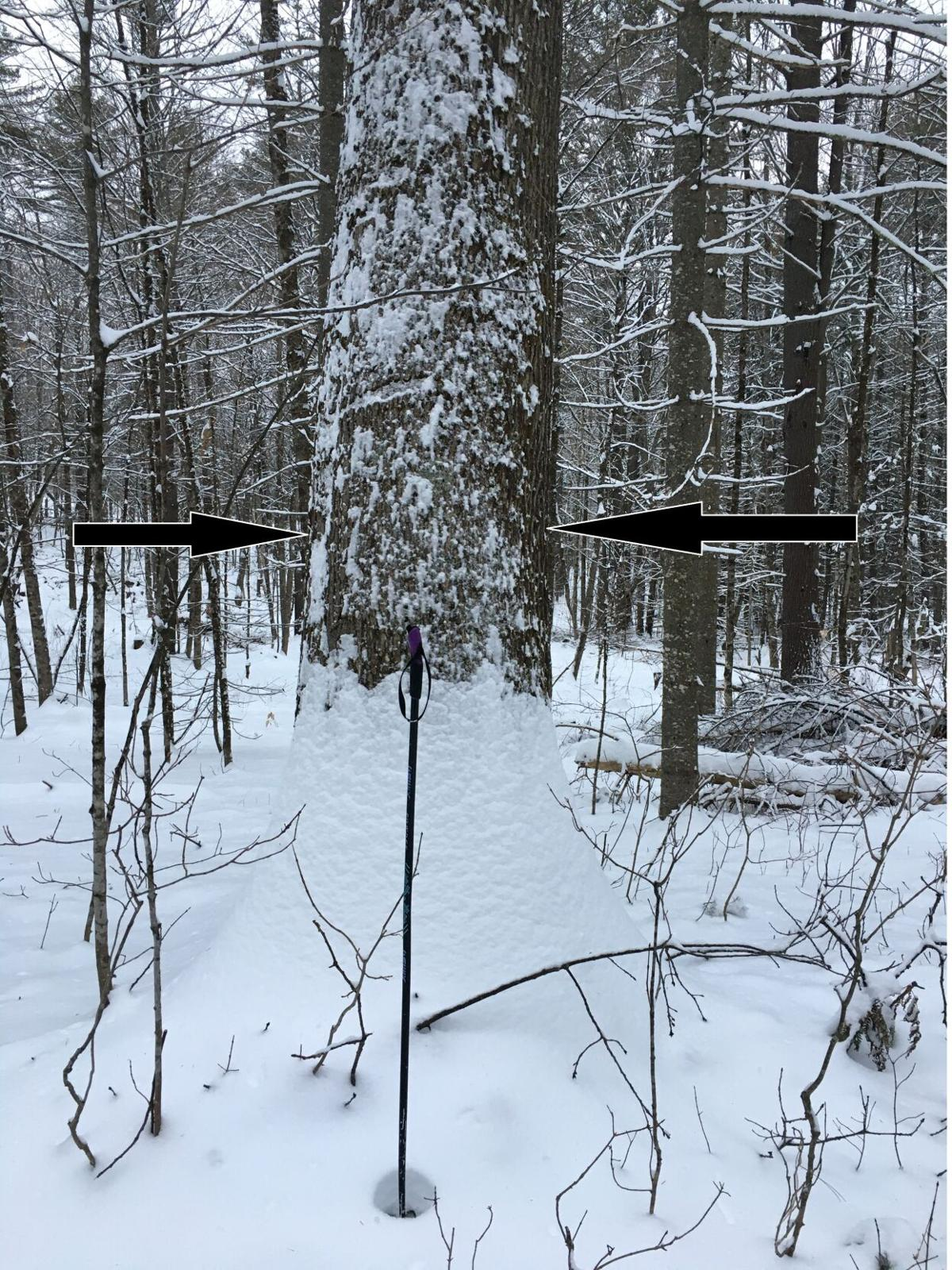 Oak 30 in Arrows.jpg