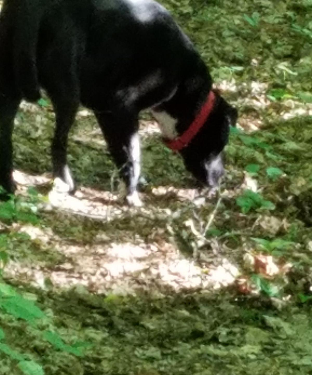 Jessie on the Chip and Dale Trail.jpg