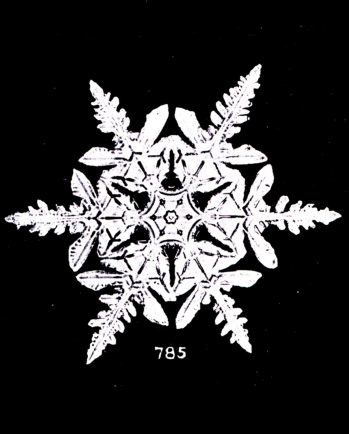 Snow_crystal_dendrite.png