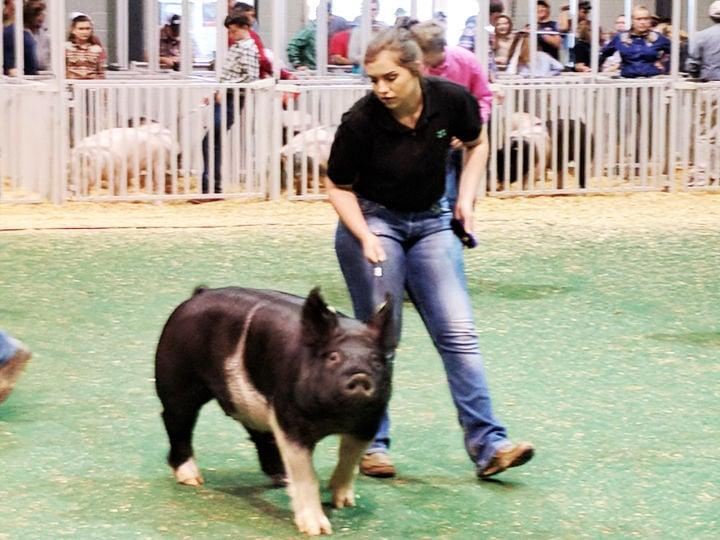 Georgia Junior National State Livestock Show