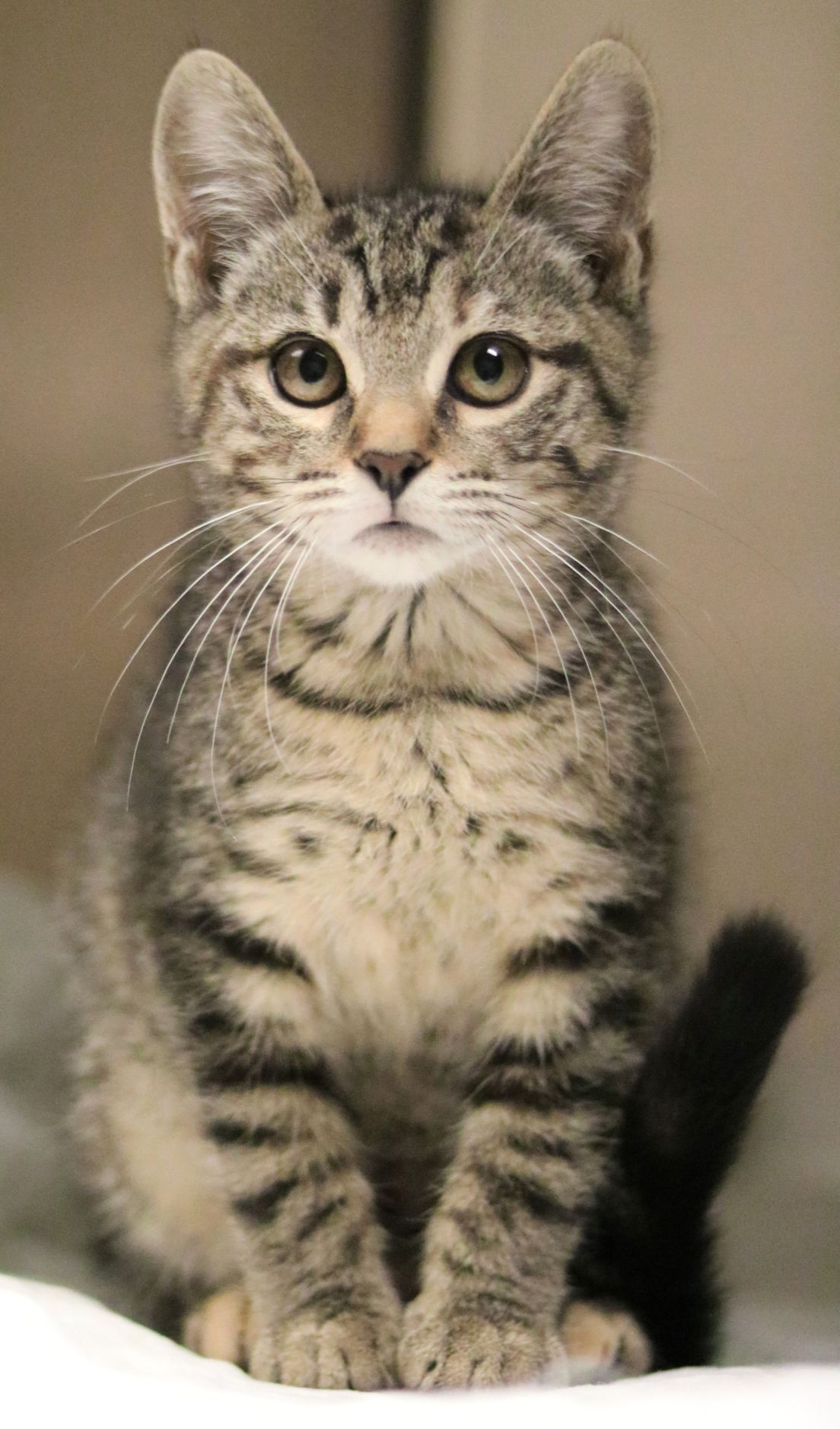 SJ Cat of the Week - September 4, 2019 edition