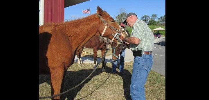 Gordon County Saddle Club to host Equine Dental Clinic, Tack Swap