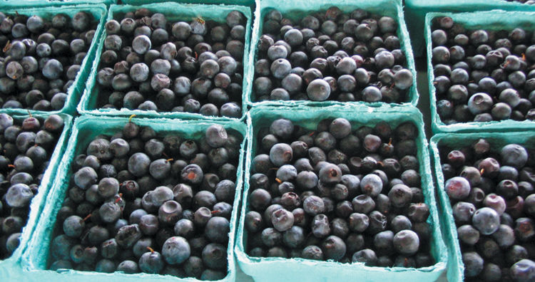 Georgia blueberry growers suffer second consecutive year of loss