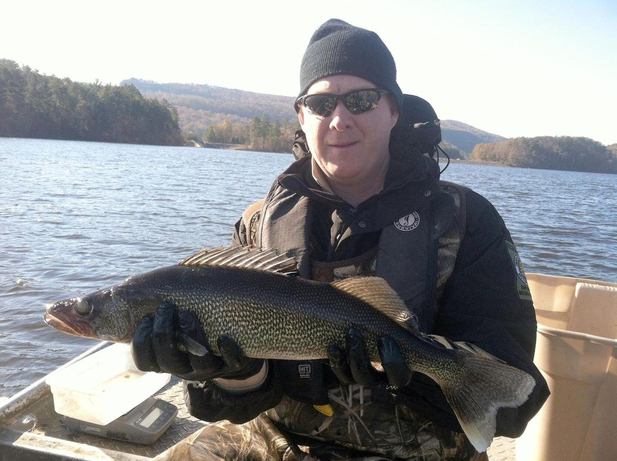 Big walleye