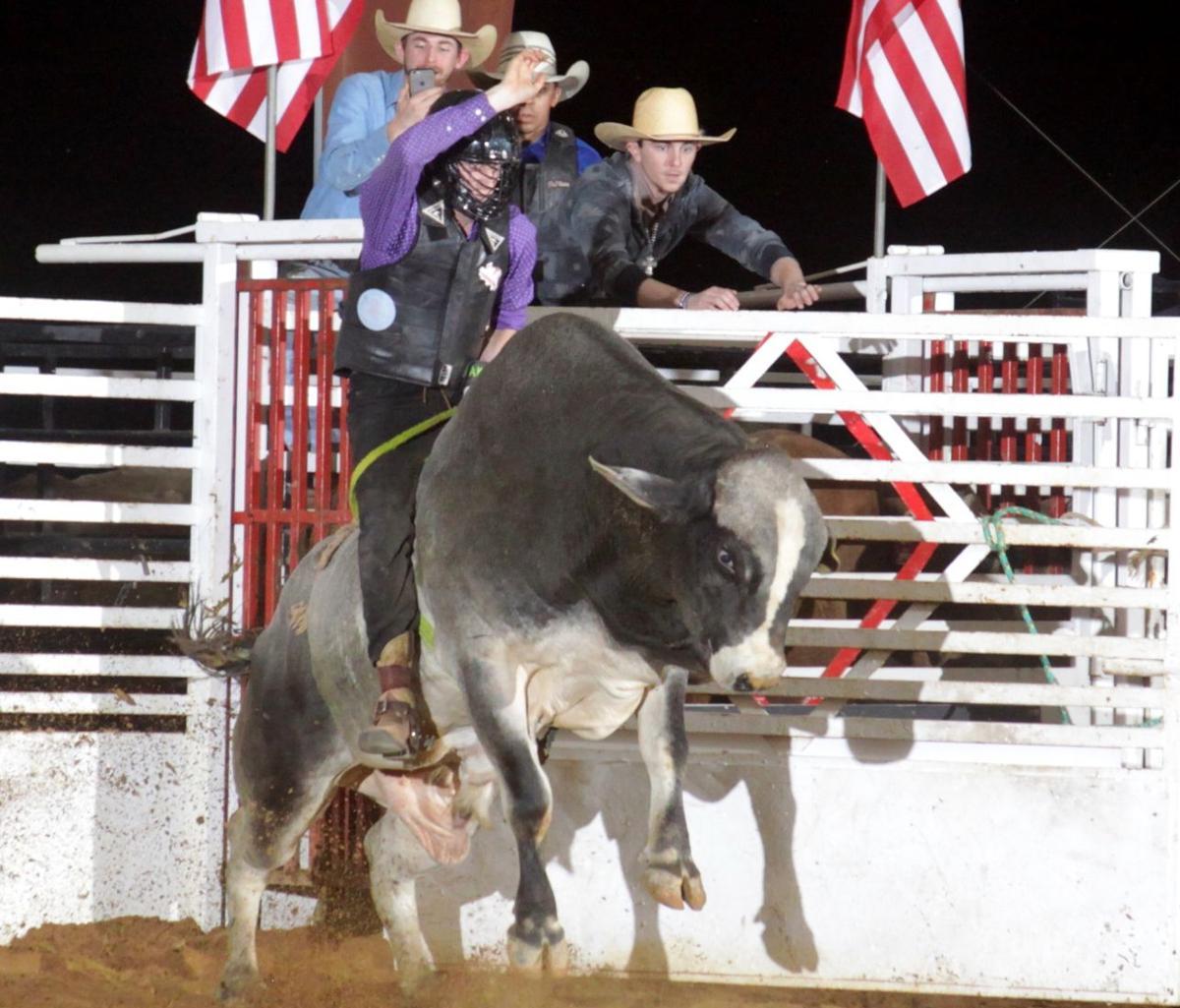 Bull115.jpg