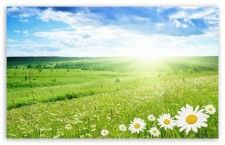 Obit-Field of Flowers