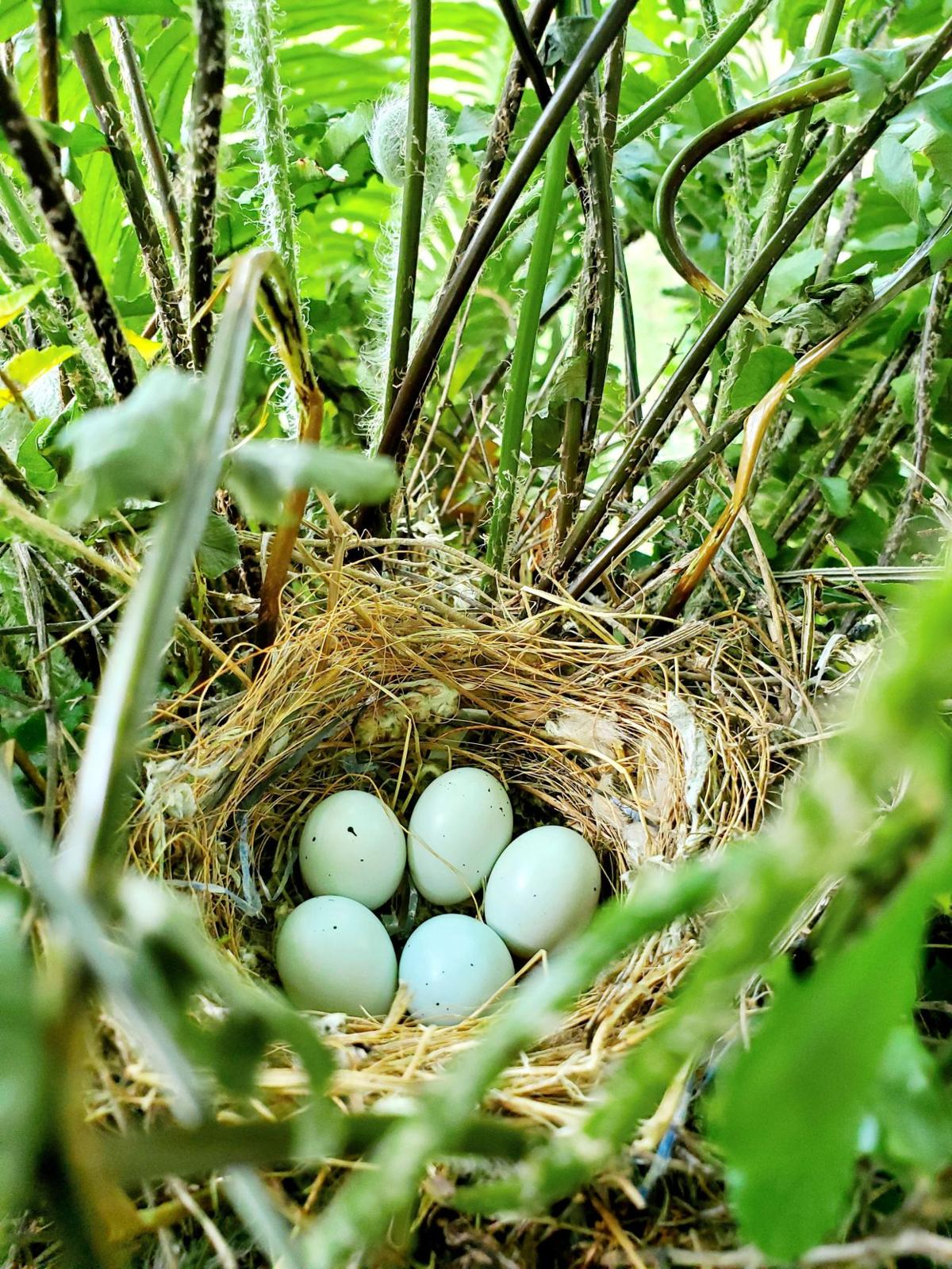 The empty nest: A front porch mystery