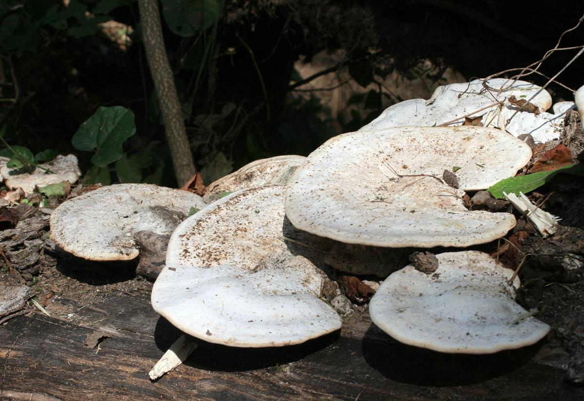 100919_RNT_Mushrooms1.jpg