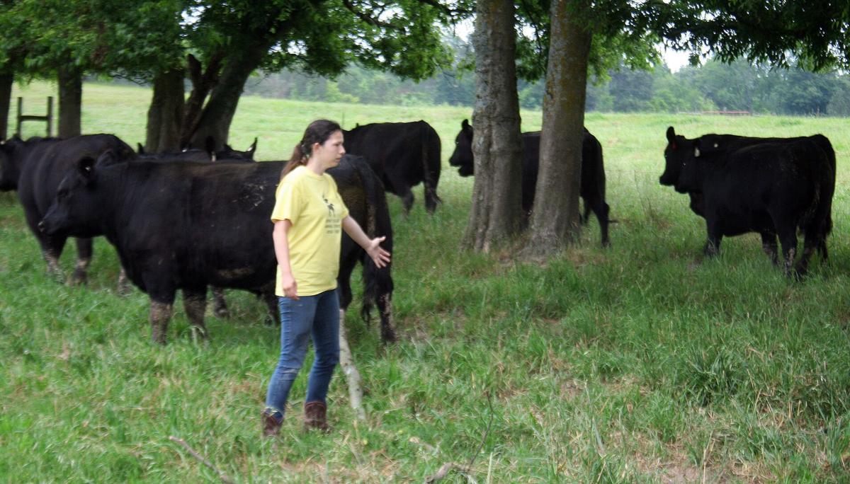 Kayla hazlett with steers