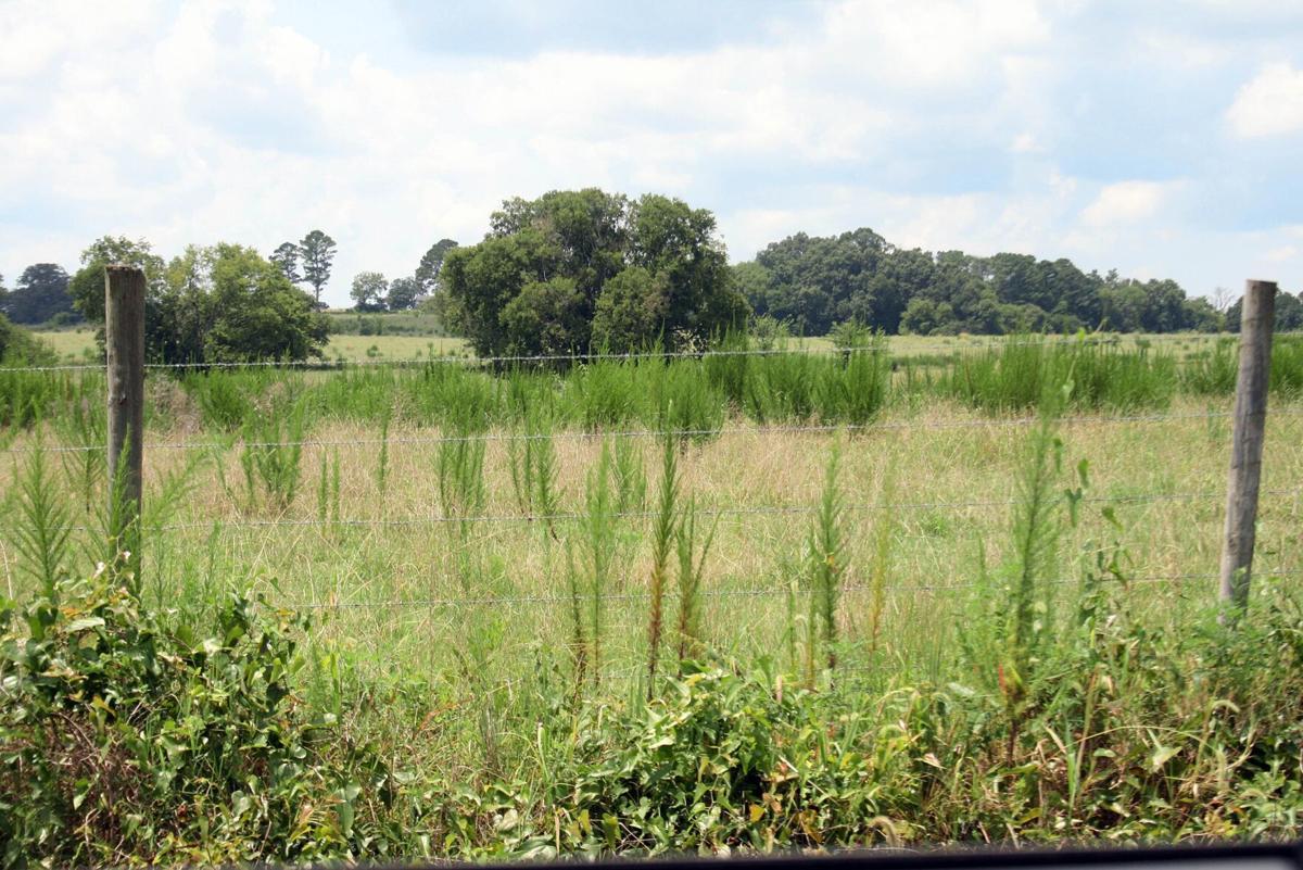 County betting Braden Farm can grow jobs instead of soybeans or corn