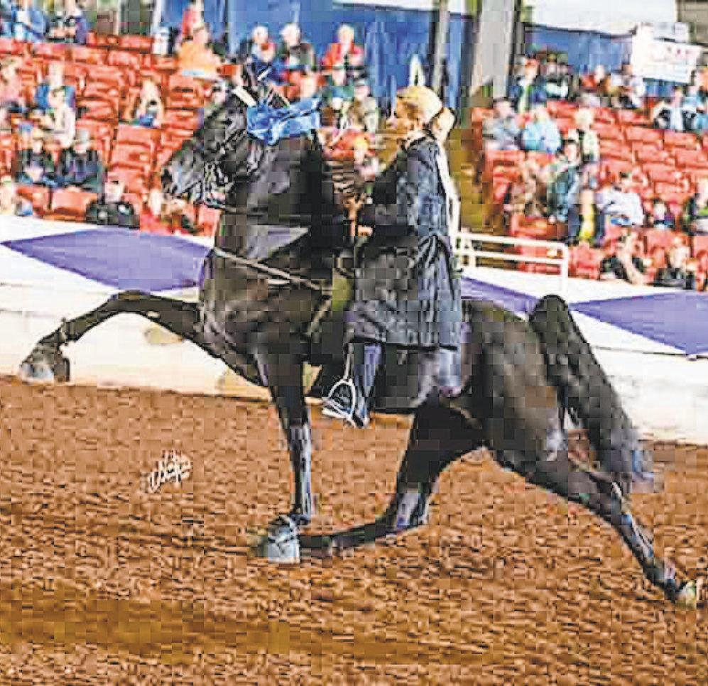 Burks back in the show ring