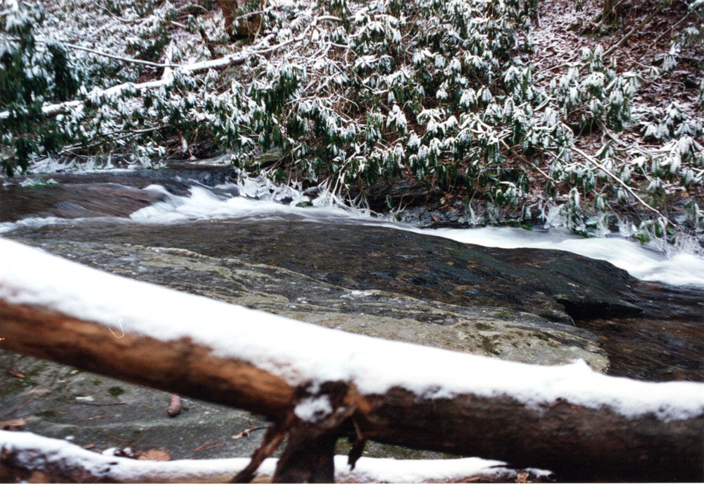 Talking Trout: Frozen streams