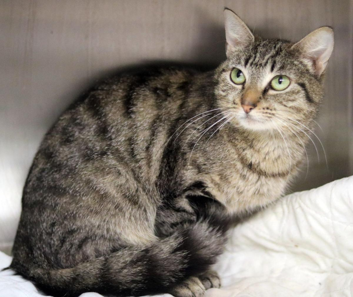 SJ Cat of the Week - July 15, 2020