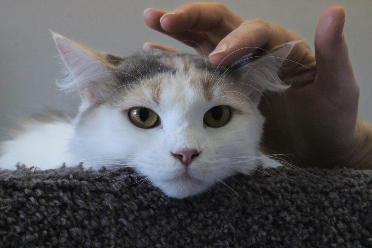 'The Voice of Broadway' adopts local feline