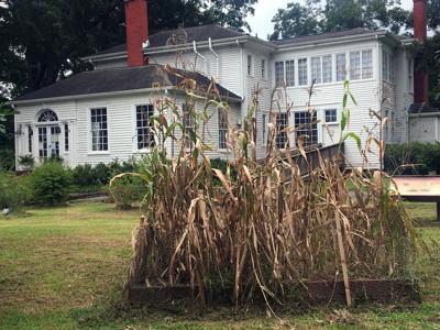 Chieftains through the corn