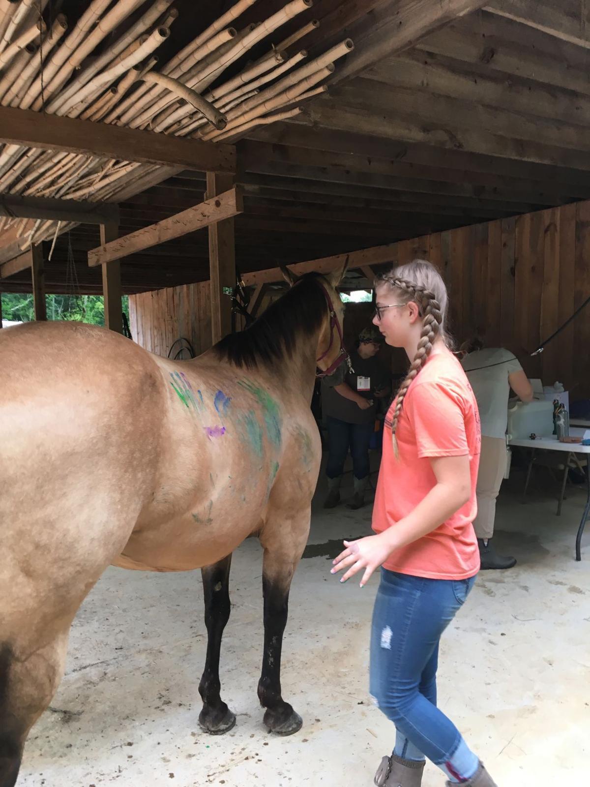 HorseCamp2