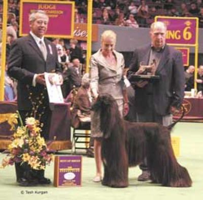 Afghan hound wins best in breed at Westminste | Local New