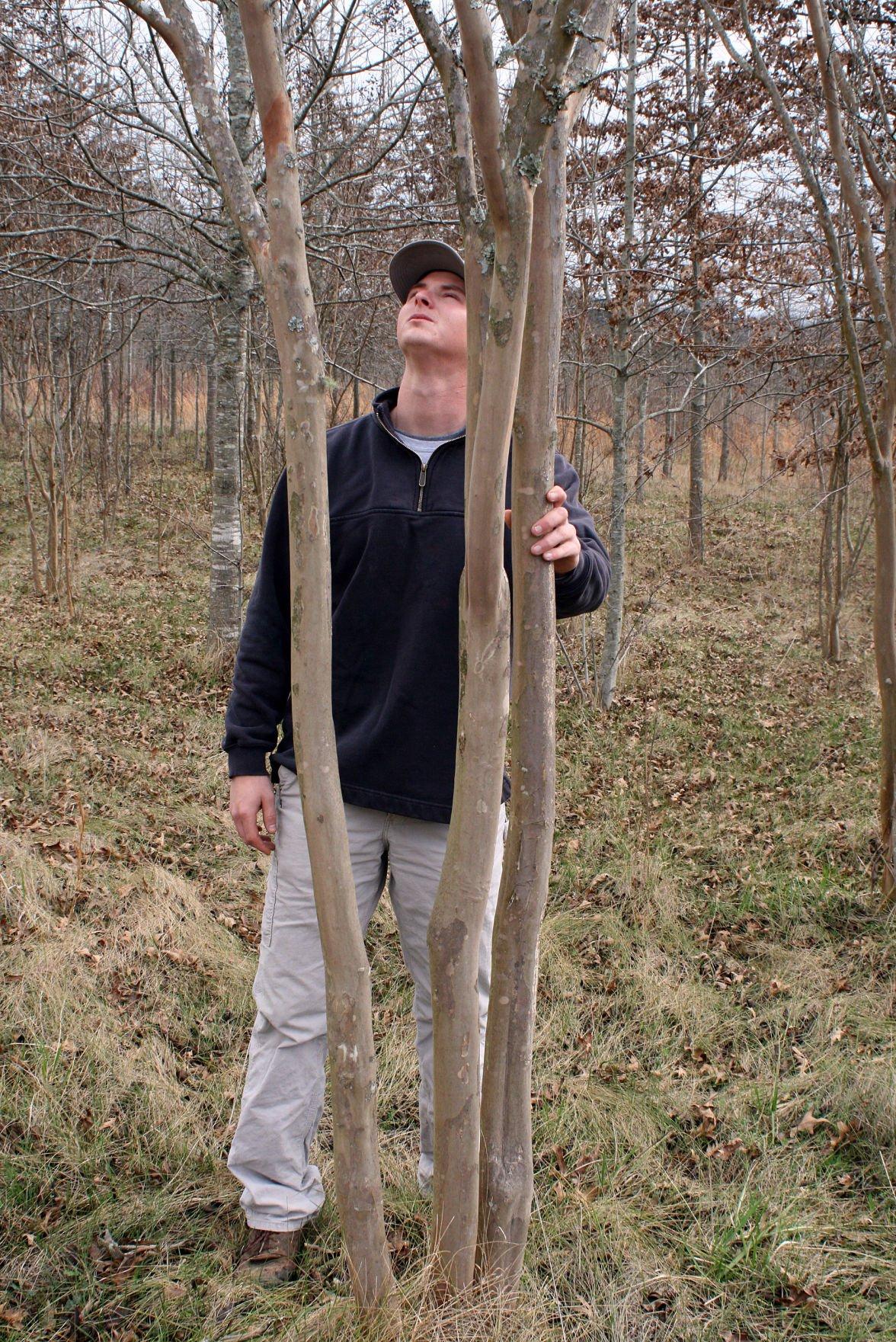 Tree farm Feb. 25, 2018