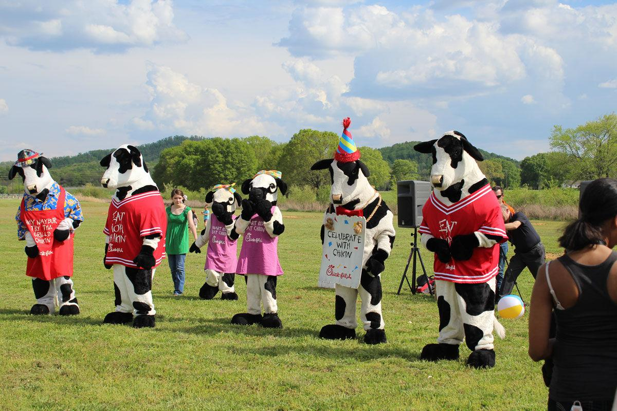 Cow grazing party at future Rockmart Chick-fil-A