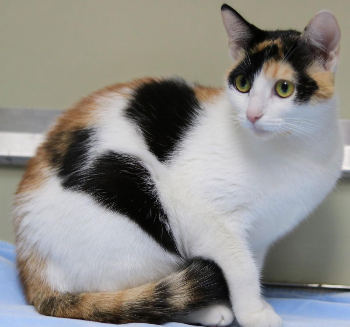 SJ Cat of the Week - April 17, 2019 edition