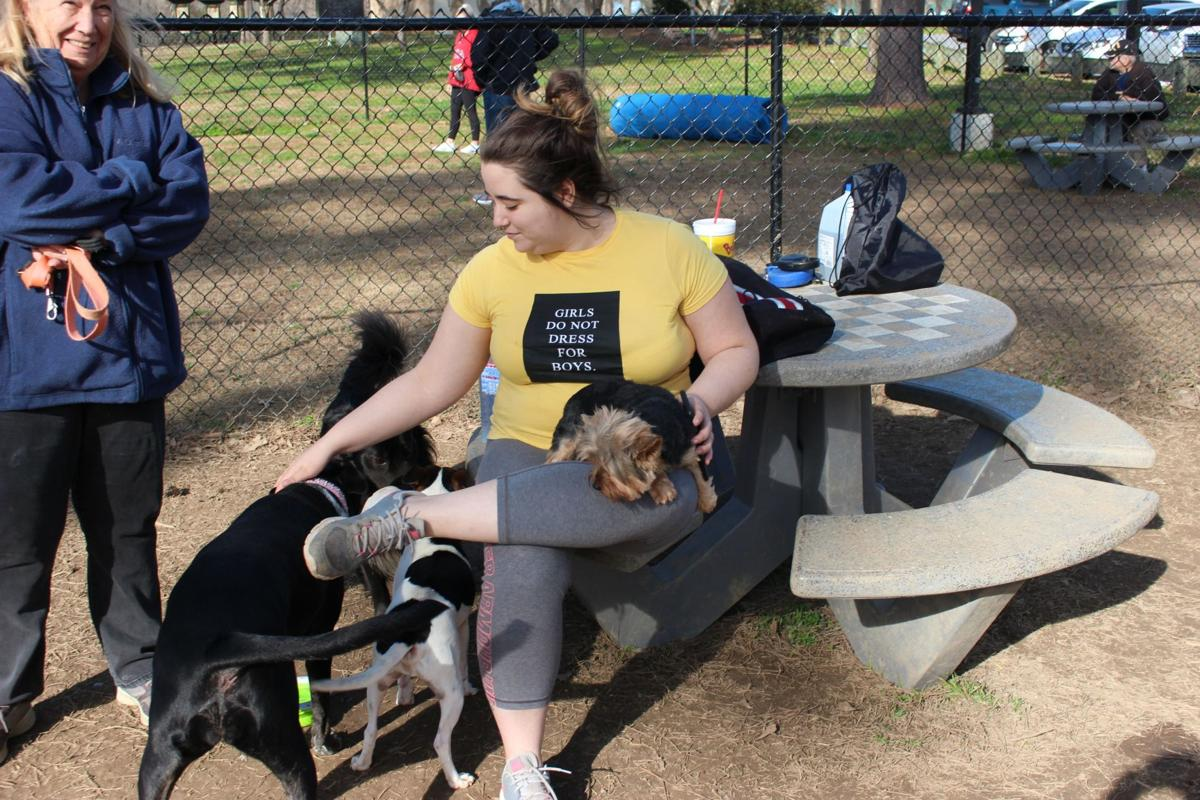 Dogs run and play at Ridge Ferry Park