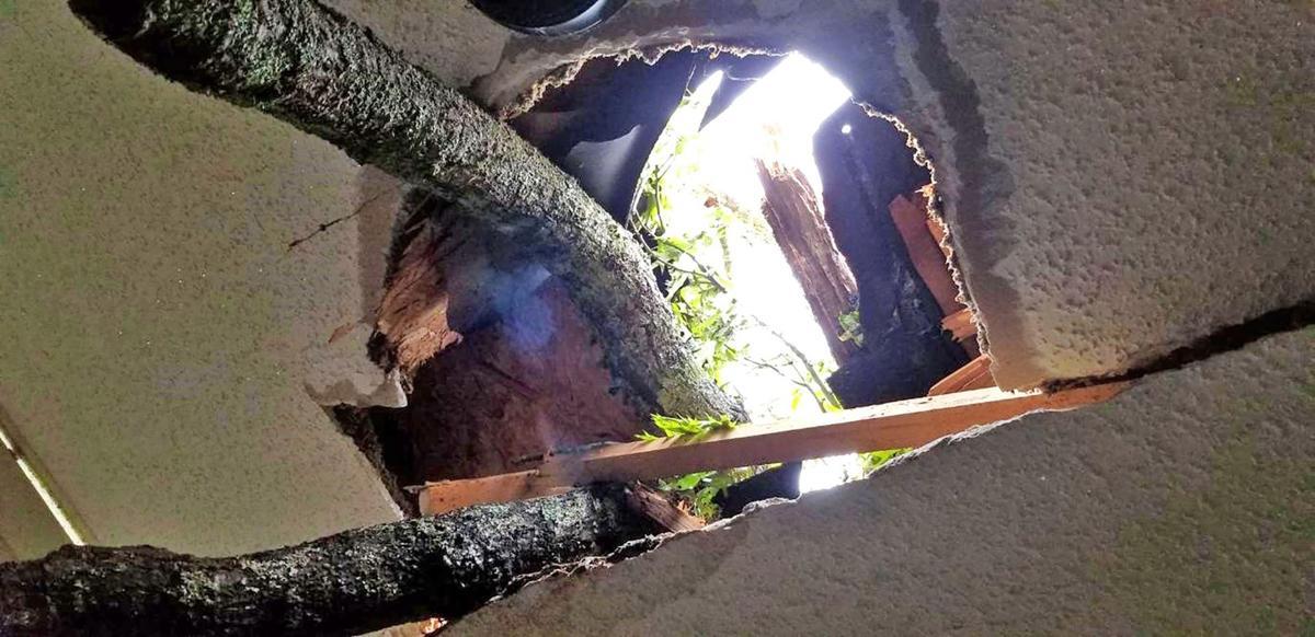 April 12 tornado, tree through roof