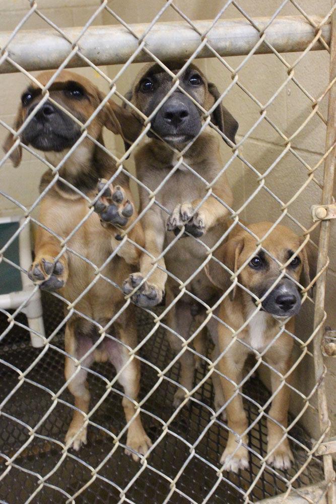 Floyd County Animal Shelter Gallery Northwestgeorgianews Com