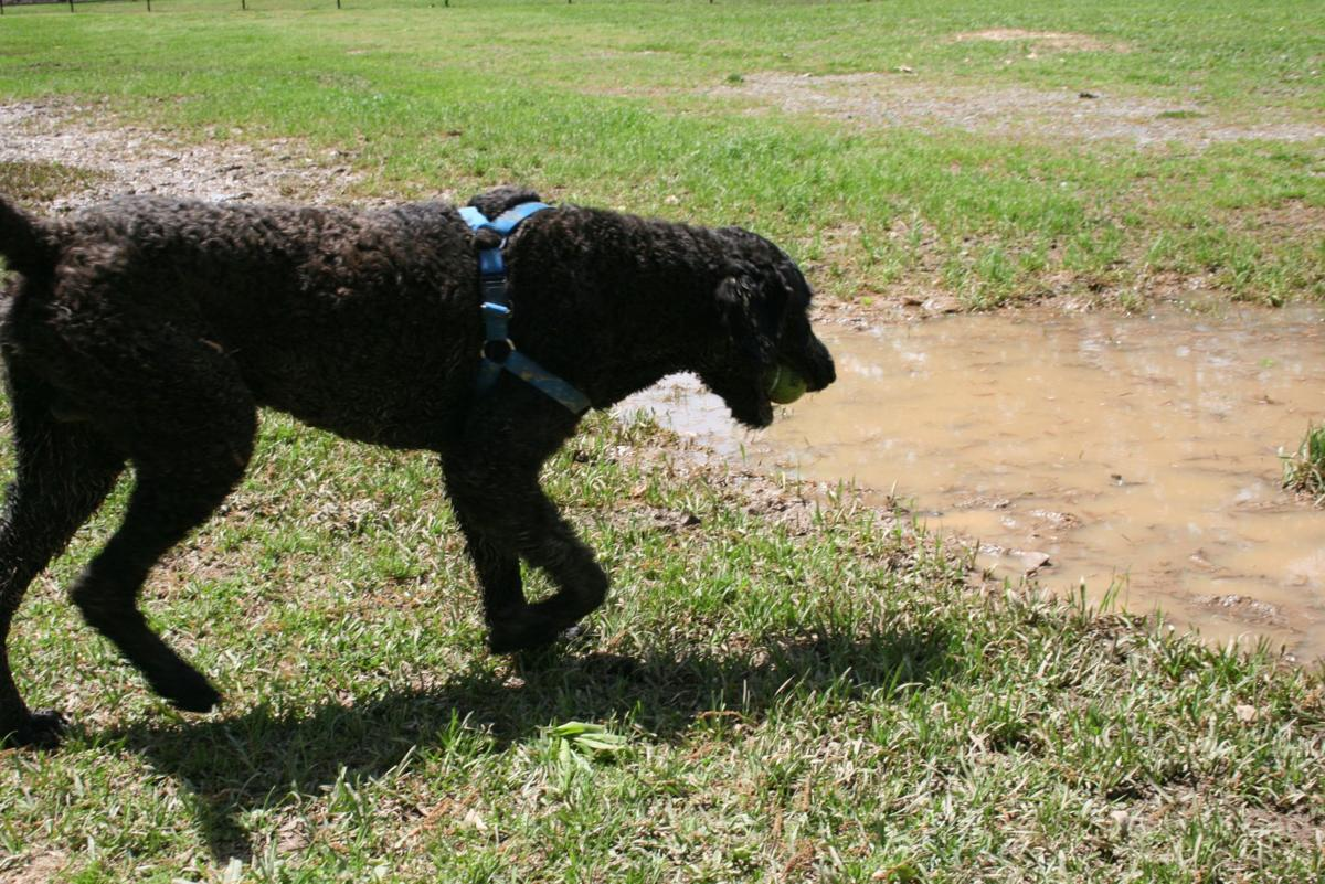 Dog park grand opening expected in May