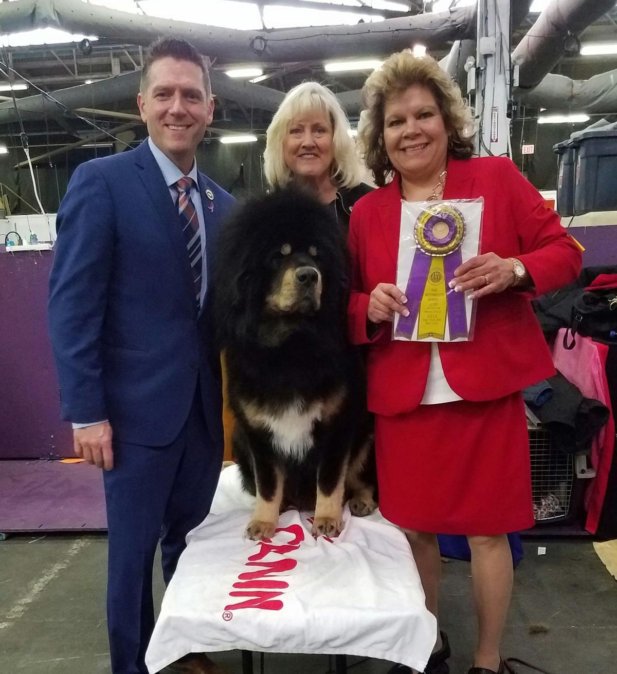 Audrey Lee, Evo win big at Westminster Dog Show