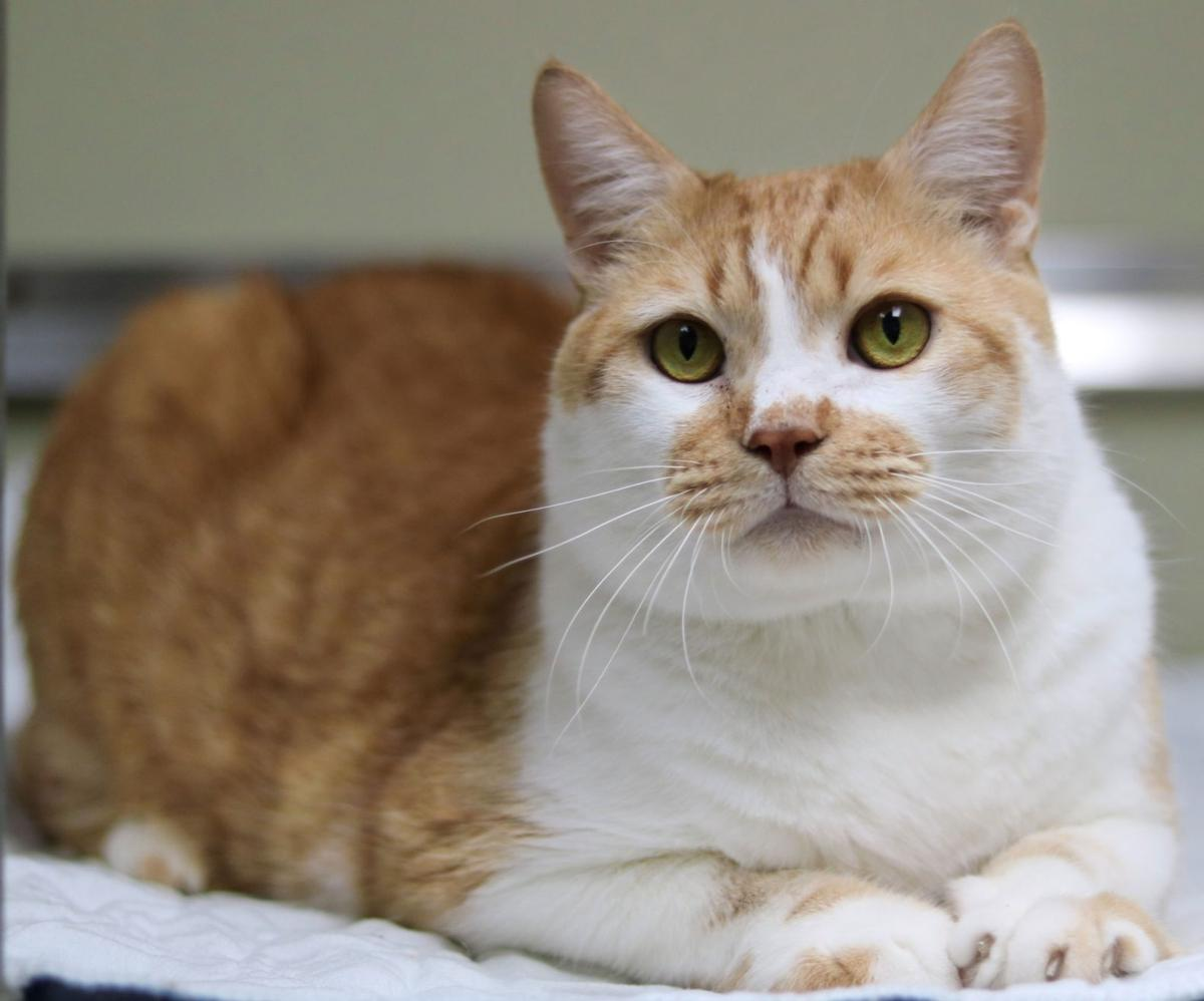 SJ Cat of the Week - June 5, 2019 edition