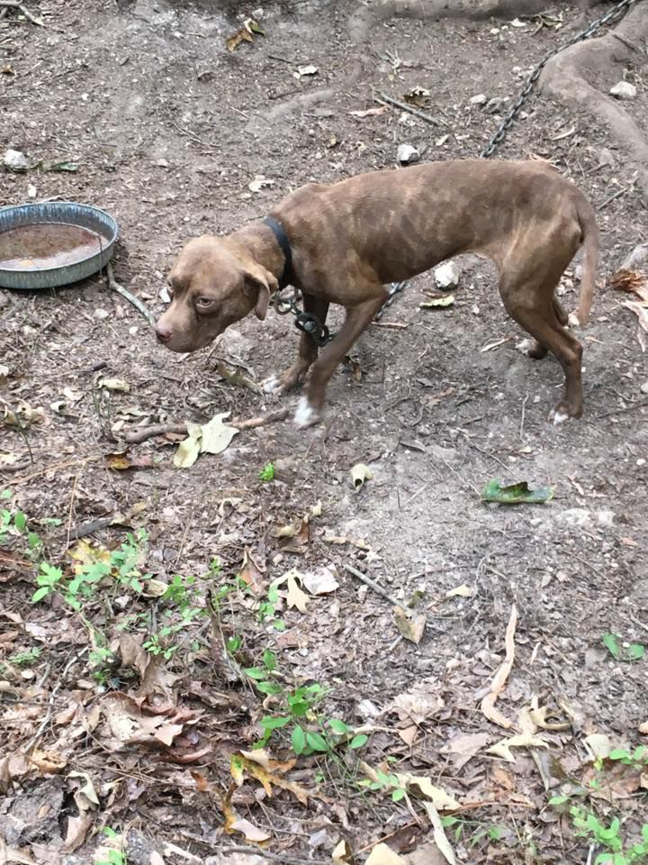 Dogs found at Cashtown Road property