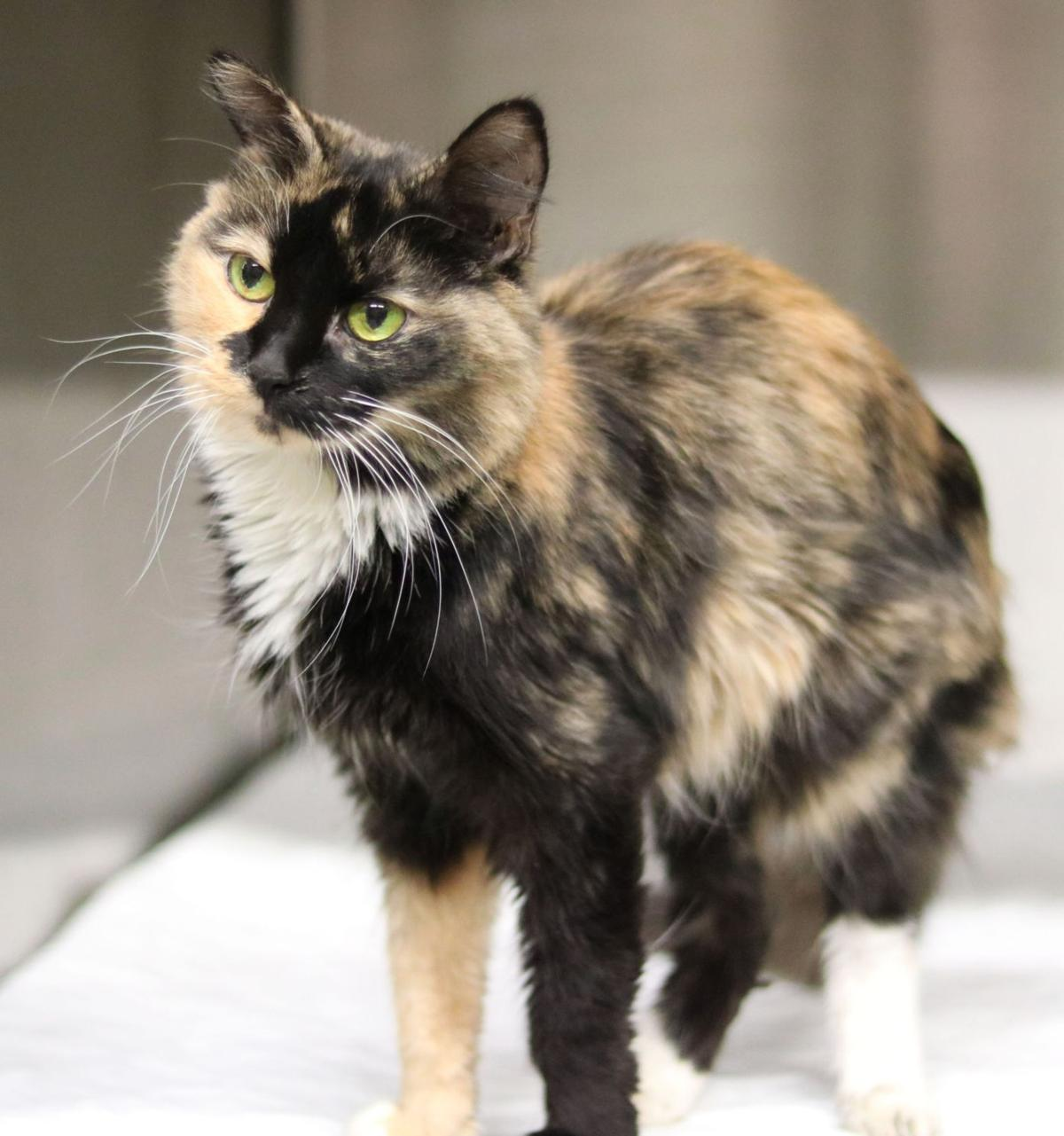SJ Cat of the Week - October 30, 2019 edition