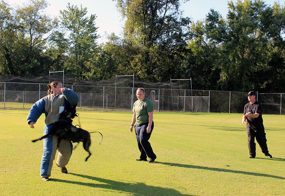 Police dog training1.jpg