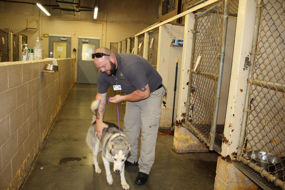 Floyd County Animal Control Sees Drop In Intake And Euthanasia Local News Northwestgeorgianews Com