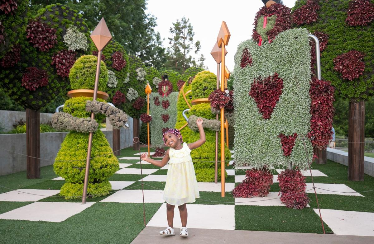 Atlanta Botanical Garden Springs Alice S Wonderland To Life Region Northwestgeorgianews Com