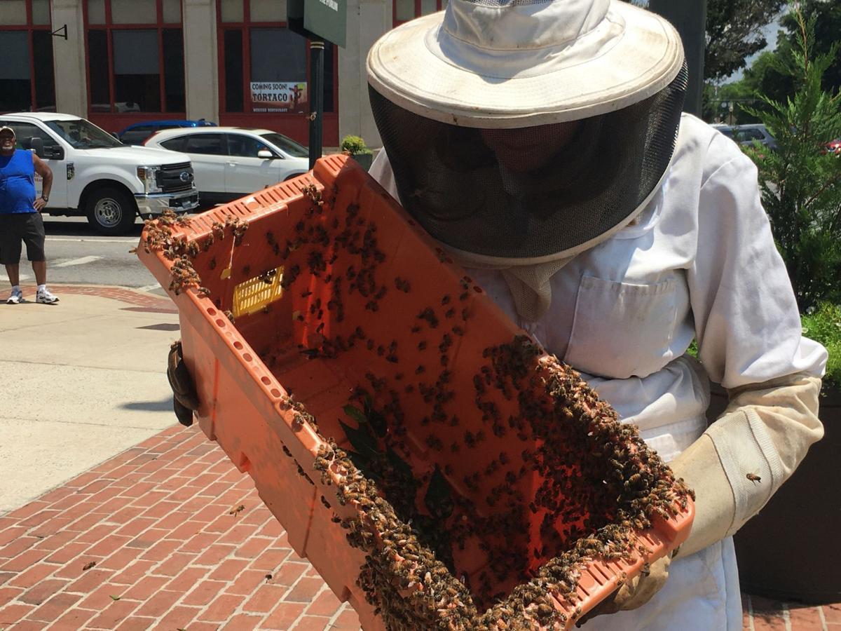 Beekeepers help remove honey bee forms around Rome and Broad Street
