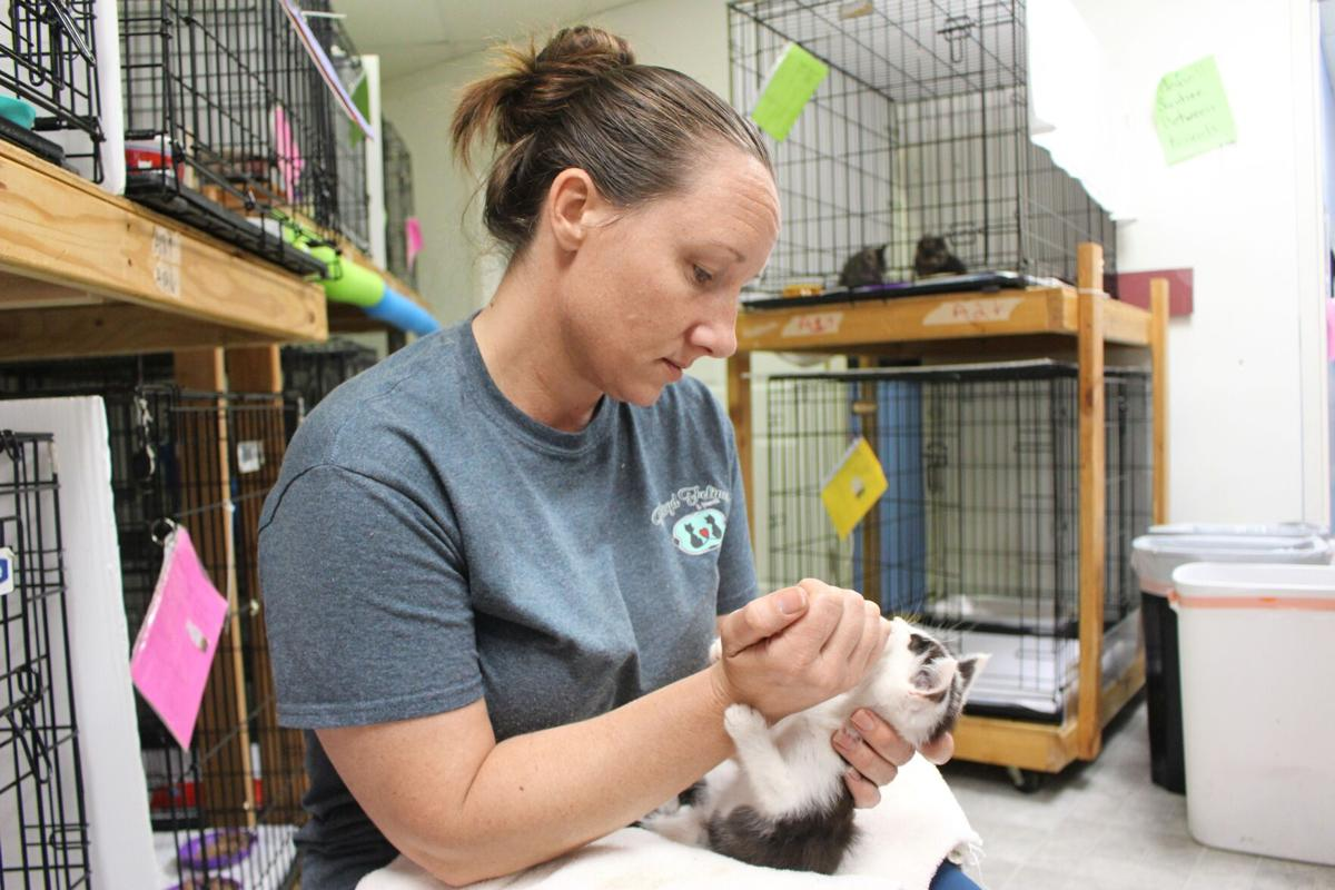 Floyd Felines expanding rescue after inundation of kittens