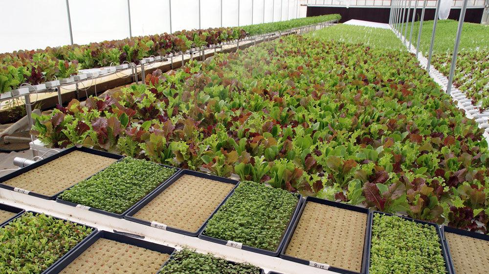 Tucker Farms greenhouses