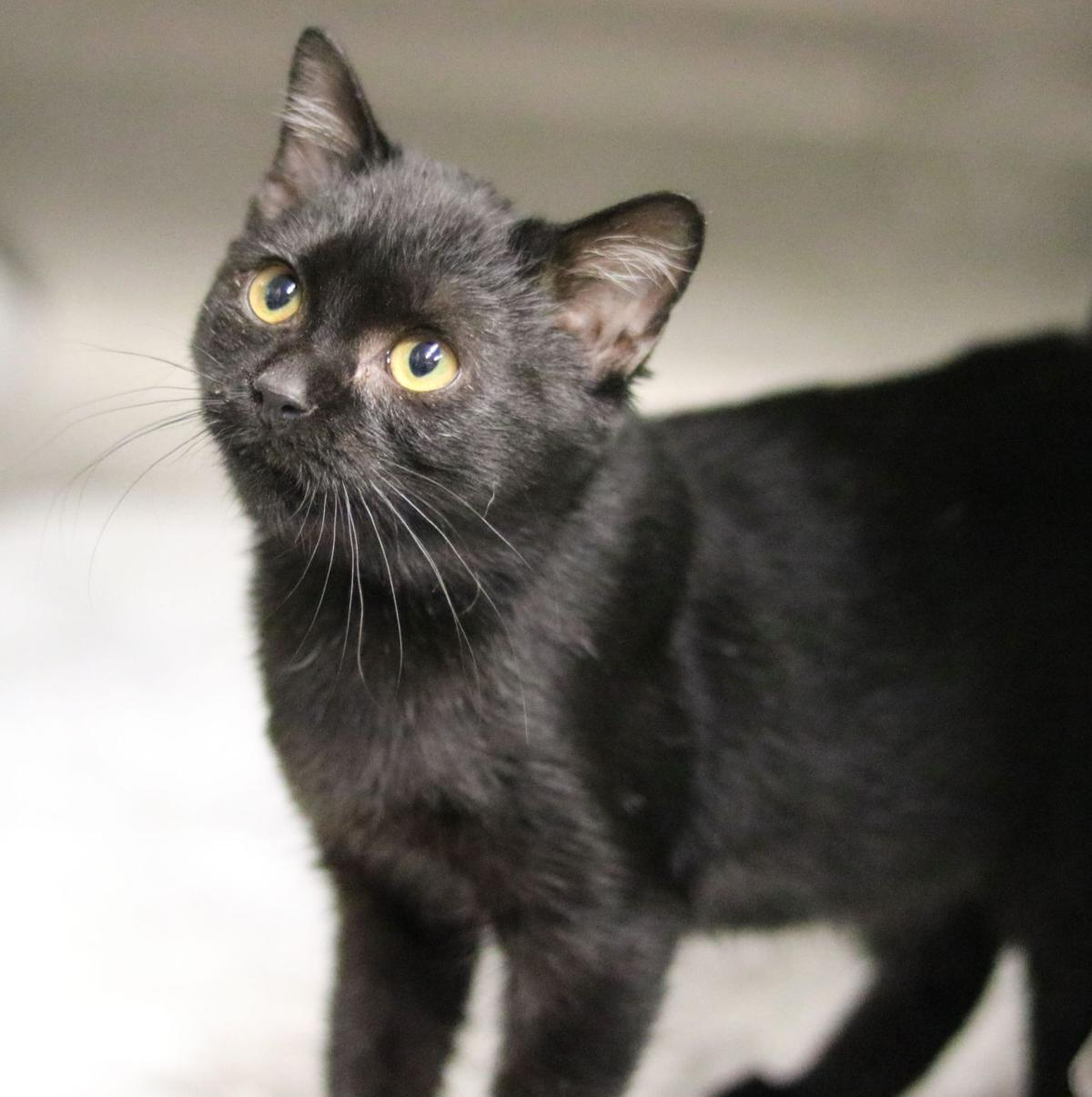 SJ Cat of the Week - Oct. 23, 2019 edition