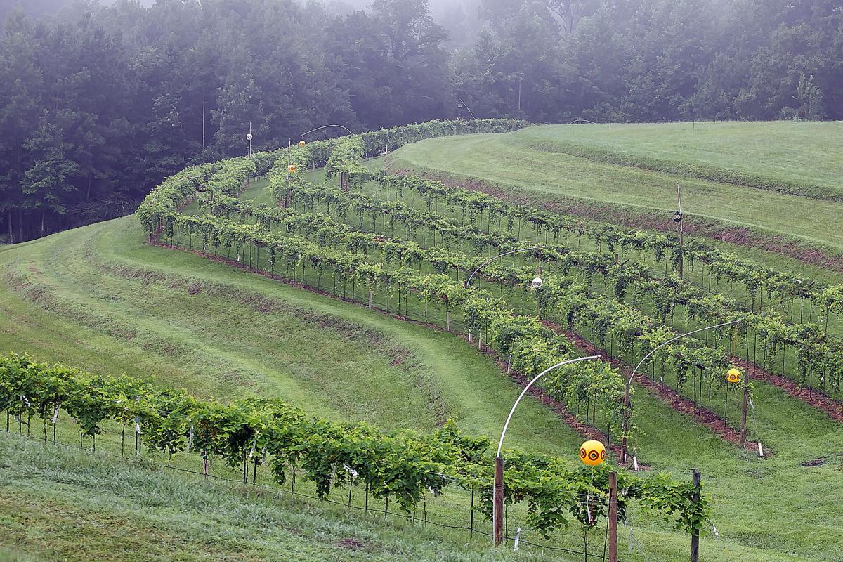 Newby Farm and Vineyard