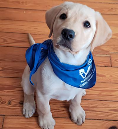 River - guide dog