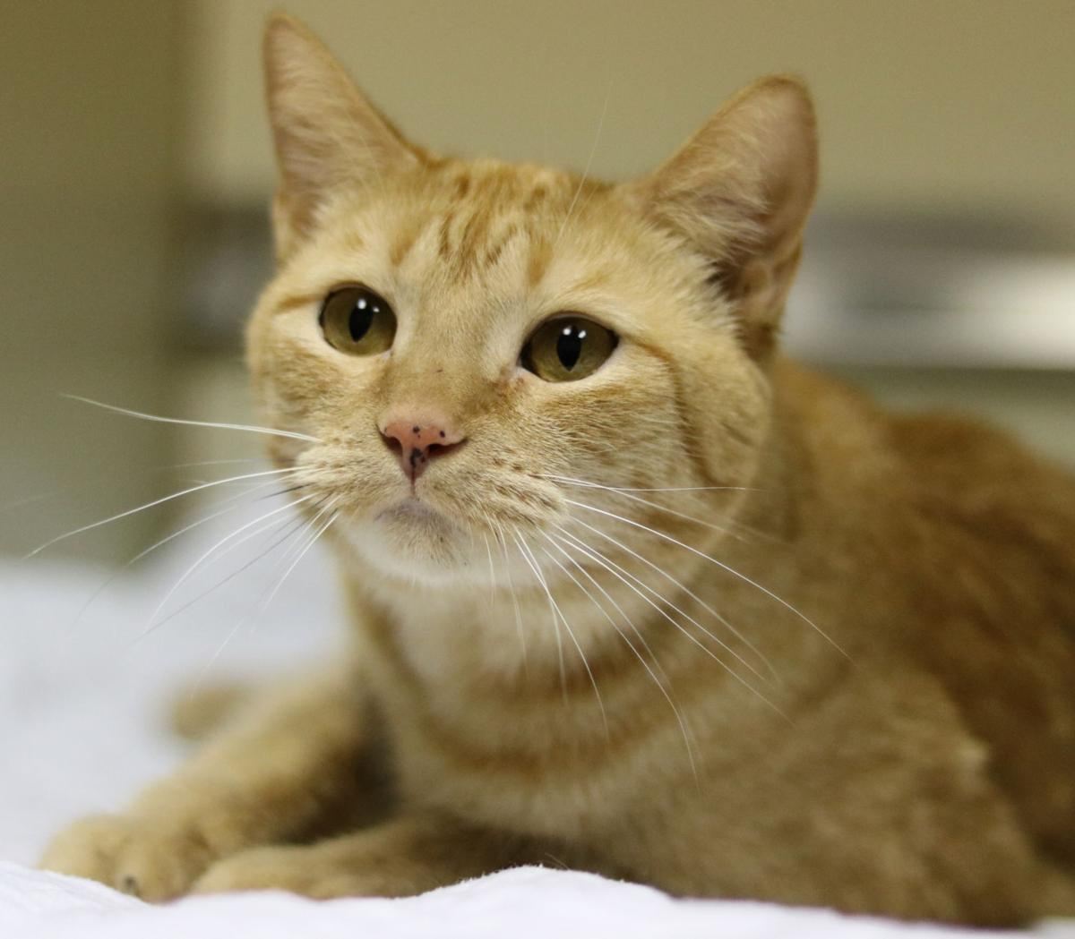 SJ Cat of the Week - January 16, 2019 edition