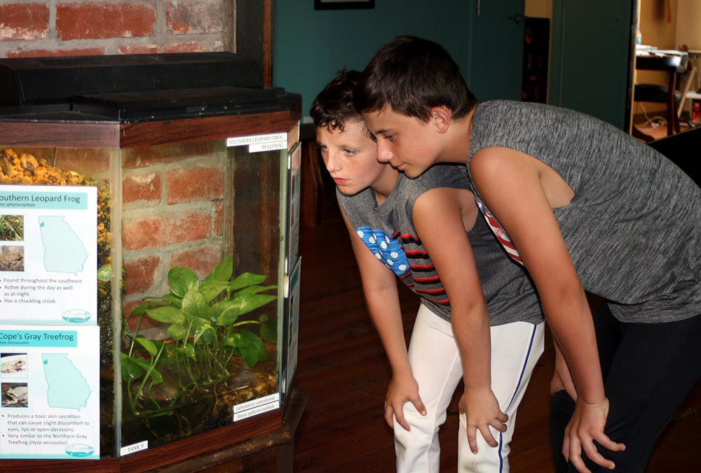 ECO-logically interesting: Finding frogs and learning about filters